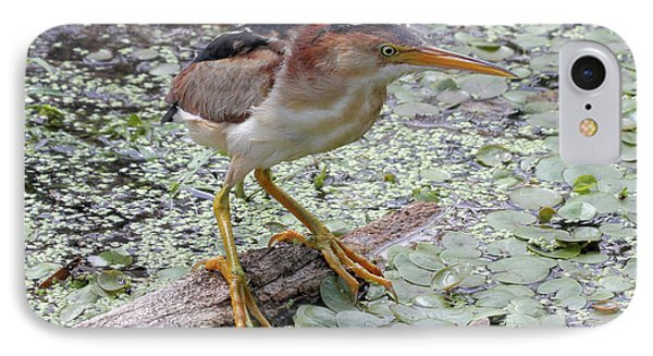 IPhone Case featuring the photograph Least Bittern by Doris Potter