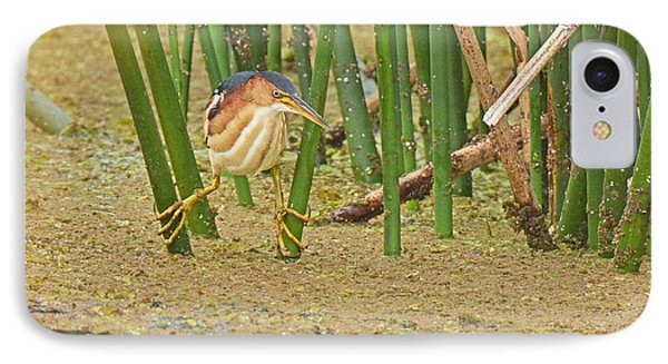 Least Bittern With Large Feet IPhone Case