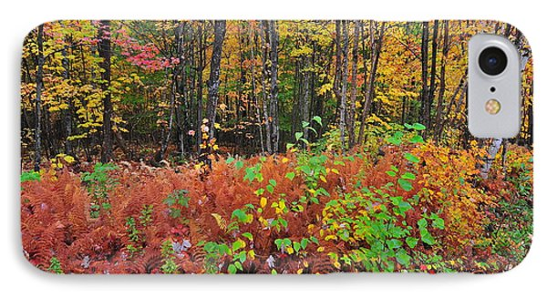 Leaves Of Many Colors  IPhone Case by Catherine Reusch Daley