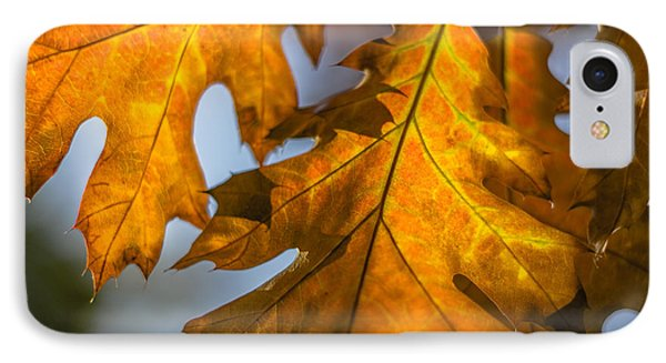 Leaves IPhone Case by Randy Bayne