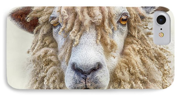 Leicester Longwool Sheep IPhone Case by Linsey Williams