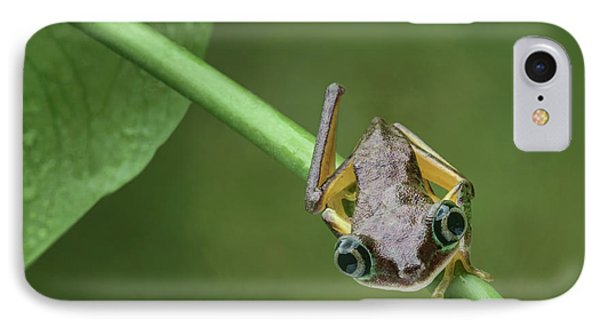 IPhone Case featuring the photograph Lemur Tree Frog - 1 by Nikolyn McDonald