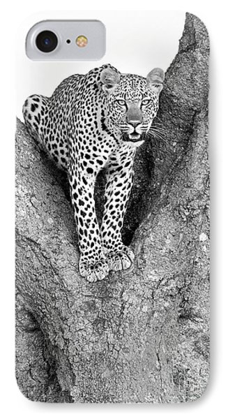 Leopard In A Tree IPhone 7 Case by Richard Garvey-Williams