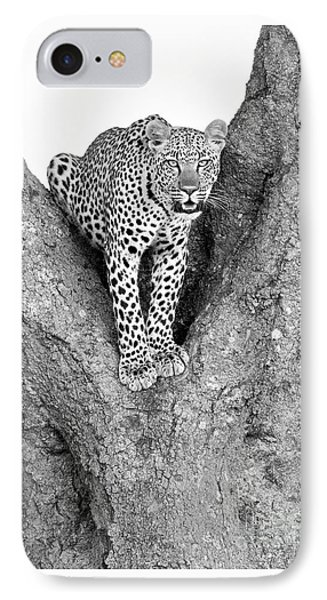 Leopard In A Tree IPhone Case by Richard Garvey-Williams