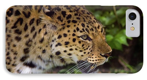 IPhone Case featuring the photograph Leopard by Steve Stuller