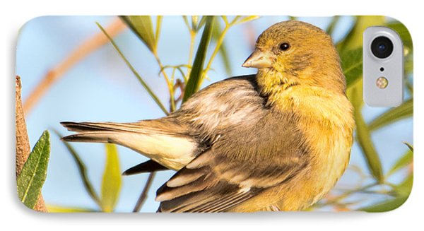 IPhone Case featuring the photograph Lesser Goldfinch by Dan McManus
