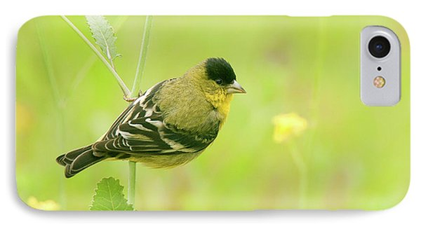 IPhone Case featuring the photograph Lesser Goldfinch  by Ram Vasudev