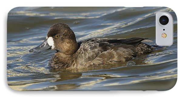 IPhone Case featuring the photograph Lesser Scaup Hen by Bradford Martin