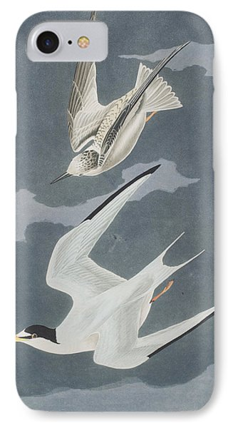 Lesser Tern IPhone Case by John James Audubon