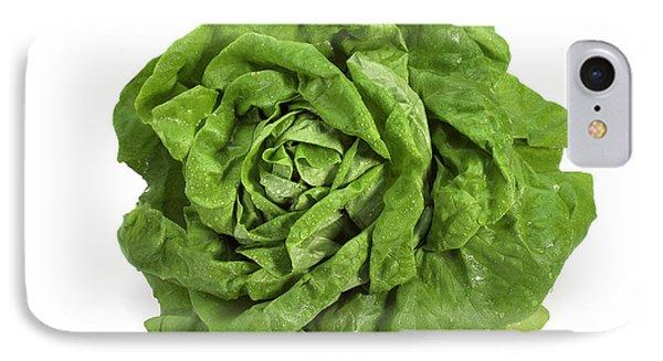 Lettuce Lactuca Sativa IPhone Case by Gerard Lacz