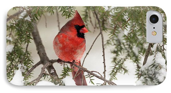 IPhone Case featuring the photograph Leucistic Northern Cardinal by Everet Regal