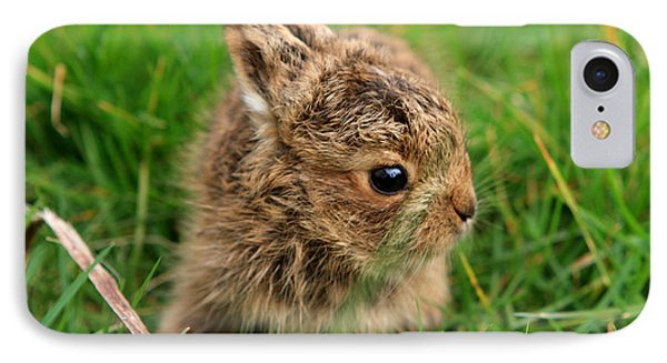 Leveret In The Grass IPhone Case by Aidan Moran