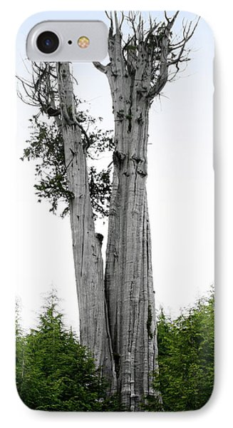Life At The Top - Duncan Cedar Olympic National Park Wa Phone Case by Christine Till