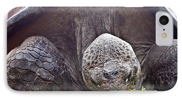 IPhone Case featuring the photograph Life Begins At 60 For Vegetarian by Miroslava Jurcik