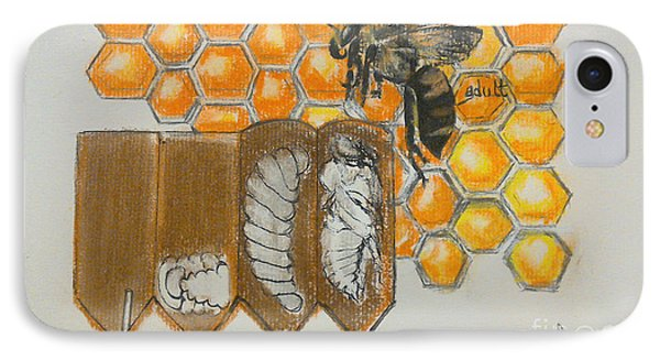 Life Cycle Of A Bee  IPhone Case