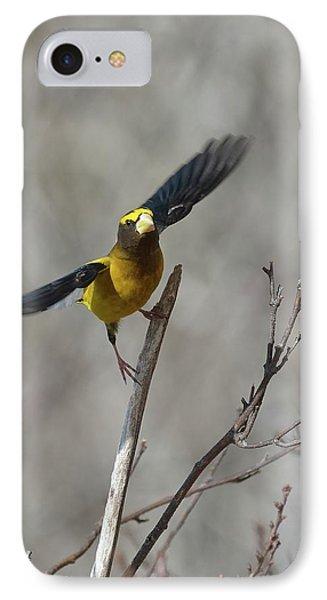 Liftoff-male Evening Grosbeak IPhone Case