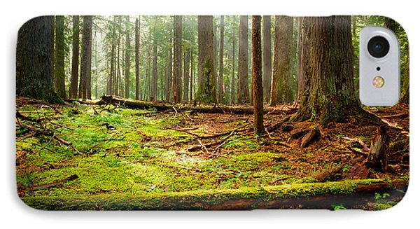 Light In The Forest Phone Case by Idaho Scenic Images Linda Lantzy