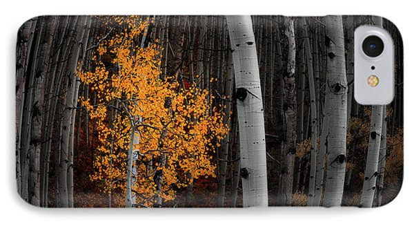 Light Of The Forest IPhone Case by Darren White