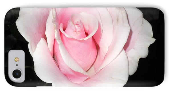 Light Pink Rose IPhone Case by Karen J Shine