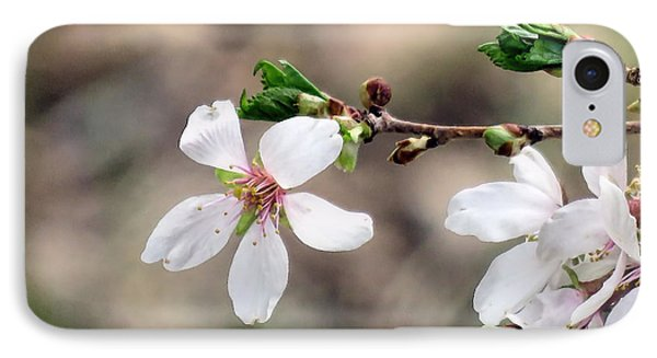 Light Pink Weeping Cherry Blossom IPhone Case by Janice Drew