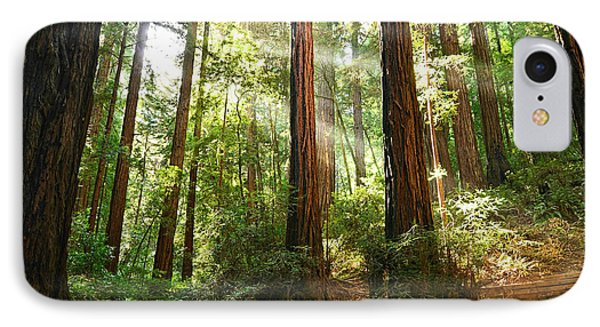 Light The Way - Redwood Forest Of Muir Woods National Monument With Sun Beam. IPhone Case