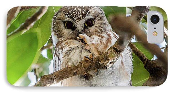 Lightweight Champ Saw-whet Owl IPhone Case by Morris Finkelstein
