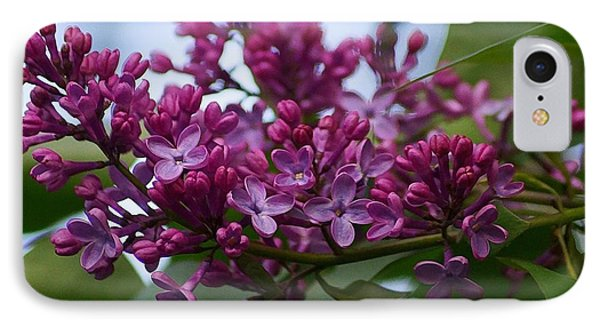 Lilac Buds IPhone Case