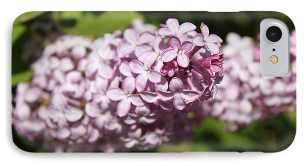 IPhone Case featuring the photograph Lilacs 5549 by Antonio Romero