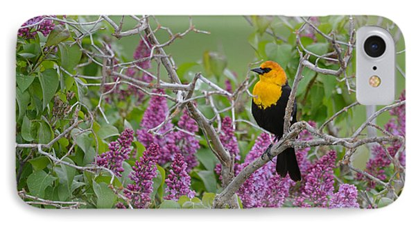 Lilacs And Yellowhead Blackbirds IPhone Case