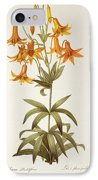 Lilium Penduliflorum IPhone Case by Pierre Joseph Redoute
