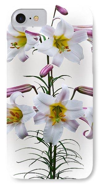 Lilium Regale IPhone Case by Jane McIlroy