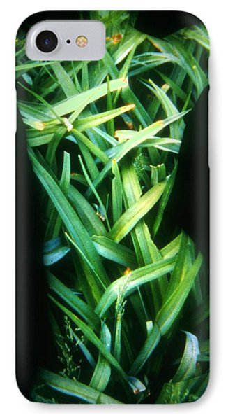 Lily Leaves Phone Case by Arla Patch