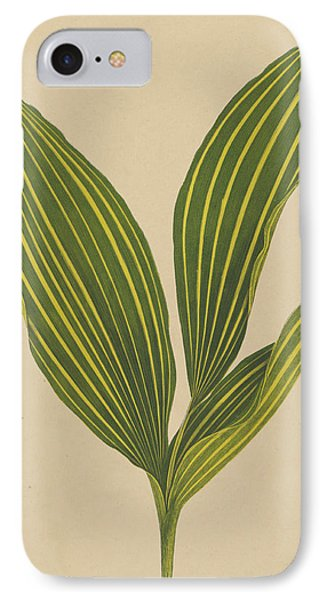 Lily Of The Valley IPhone Case by English School