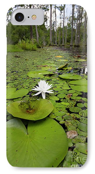 Lilypads And Flower In The Cypress Swamp IPhone Case