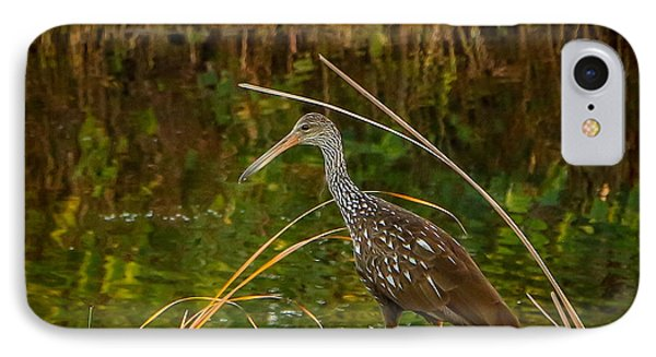 Limpkin At Water's Edge IPhone Case by Tom Claud