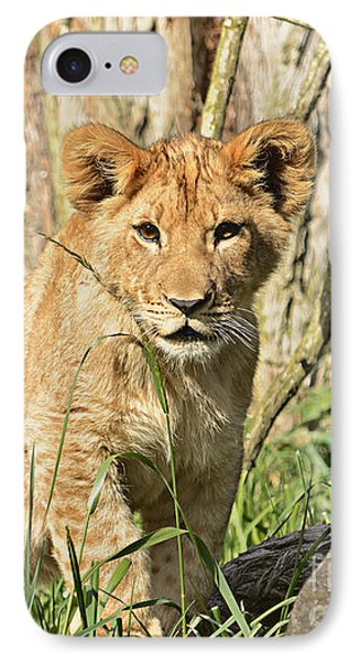 Lion Cub 2 IPhone Case by Marv Vandehey