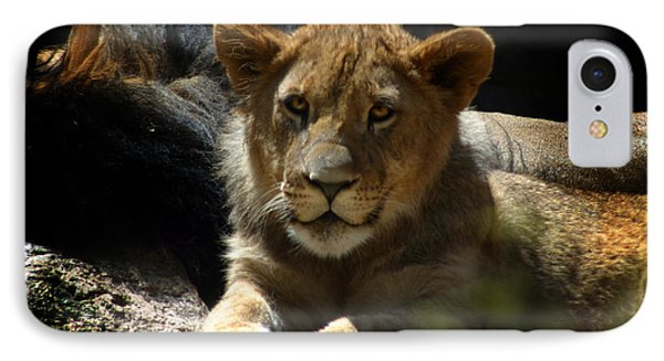 Lion Cub Phone Case by Anthony Jones