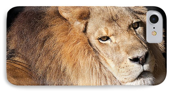 Lion Highlights Phone Case by Kenneth Albin