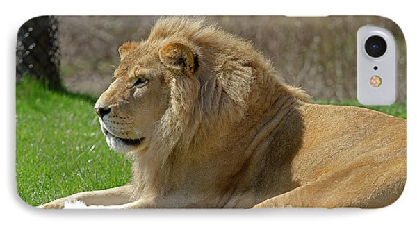 IPhone Case featuring the photograph Lion by JT Lewis