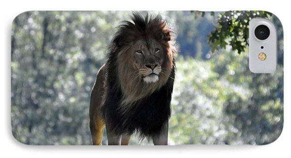 Lion Series 3 IPhone Case by Teresa Blanton