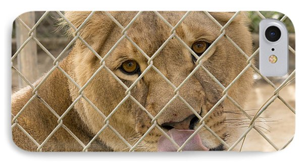 Lioness Licks IPhone Case by Travis Rogers