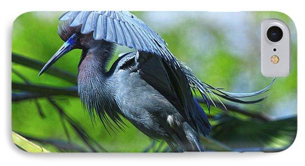 IPhone Case featuring the photograph Little Blue Heron Alligator Farm by Deborah Benoit