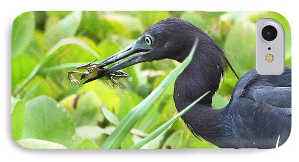Little Blue Heron Catches A Frog IPhone Case by Barbara Bowen