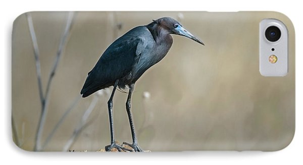Little Blue Heron On A Log IPhone Case by Robert Frederick