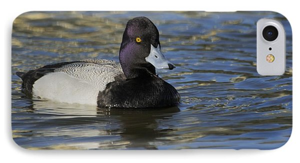 IPhone Case featuring the photograph Little Bluebill - Lesser Scaup Drake by Bradford Martin