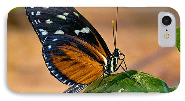 Little Butterfly Phone Case by Christopher Holmes