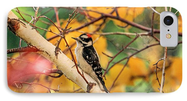 Little Downy In Autumn Phone Case by Donna Kennedy