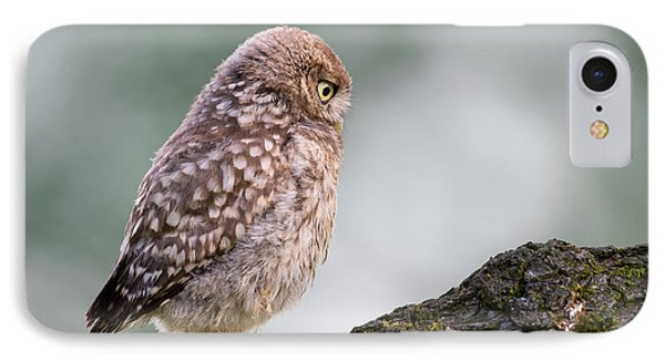 Little Owl Chick Practising Hunting Skills IPhone Case by Roeselien Raimond