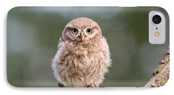 Little Owl Chick IPhone Case by Roeselien Raimond