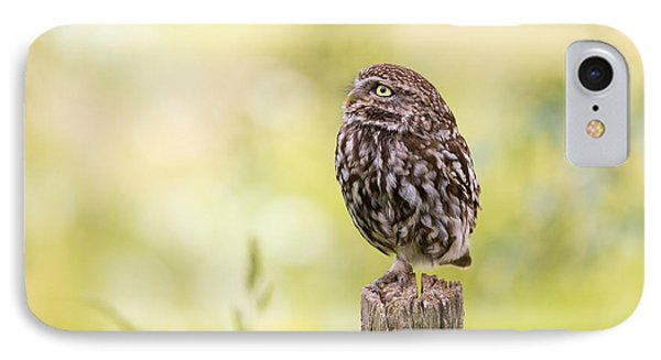 Little Owl Looking Up IPhone Case by Roeselien Raimond
